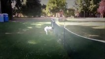 Funny Cats   Funny Animals   Dogs Funny   Jokes about animals 2015   Best Funny Fun Animal