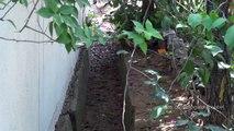 Dogs and Cobras in our hood in Bengaluru Karnataka India