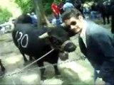 les Ouais au combat de vaches en valais