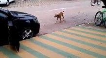 quand un chien écoute a sa chanson préféré