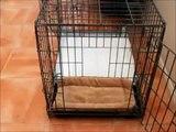How To Potty Train A Boston Terrier - Boston Terrier House Training Tips - Boston Terrier Puppies