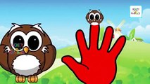 Finger Family owl Cartoon Family Nursery Rhymes   Finger Family Birds   Daddy Finger Rhymes