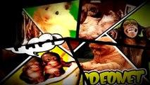 Mejores Videos de Risa 2015 -  Gatos/perros/caidas/golpes/animales chistosos