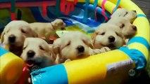 Pet Hotel Dog Life - Programa Mundo Pet - SBT - Existe Aula de Natação só para cachorro - 19.10.14