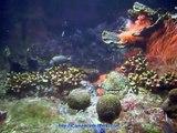 Acquario di Genova - Pesci Tropicali