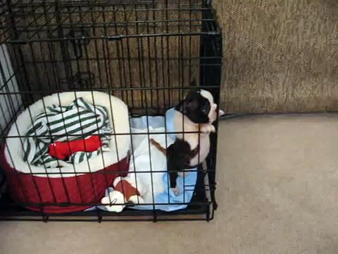 New pup not liking his crate