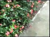 SE VENDE CASA EN JARABACOA REPUBLICA DOMINICANA HOUSE FOR SALE IN JARABACOA DOMINICAN REPUBLIC