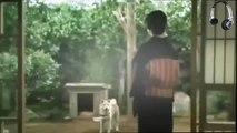 [FanMade] Hachiko, A Dog's Story Video, (Câu chuyện rơi nước mắt về chú chó Hachiko)