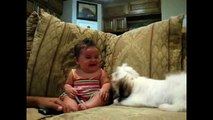 Dog Barking but baby laughing   babies laughing compilation 2015