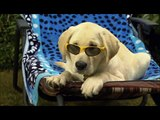 Marley & me: It all runs together by Theodore Shapiro