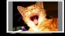 Best Funny yawning Cats Video   Лучшие фото приколы лето 2015   Зевающие коты №2 Funny videos Fun TV