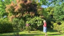 Jardin de Normandie : les jardins et roseraie du Château de Miserey