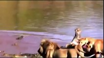 Animal Planet   Discovery Channel   Wild Life Documentary 2015   National Geographic Wildlife #191