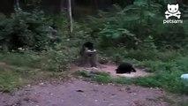 Котам медведи пофиг-приколы 18