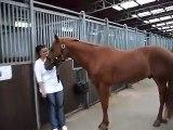Pferdegeburtstag- Ständchen in Moll