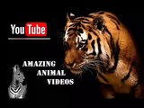 Animal Planet   Discovery Channel   Wild Life Documentary 2015   National Geographic Wildlife #161
