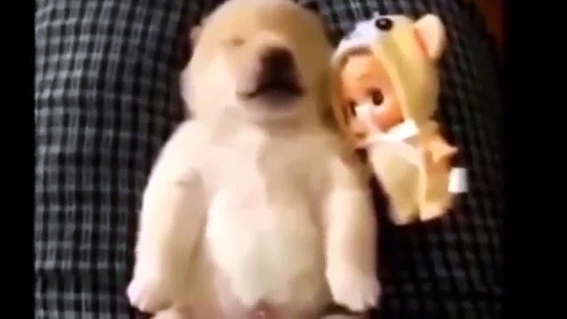 Приколы с животными Смешные животные Funny animal