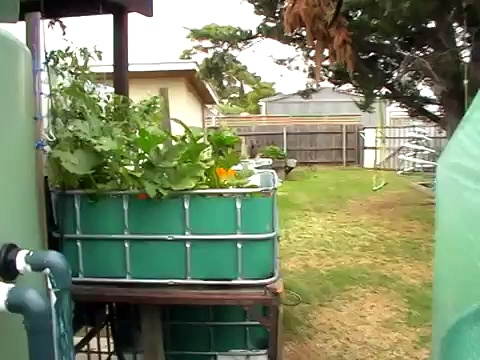The best raft system for aquaponics, the anchored raft