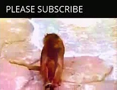 Funny Animals Videos Monkey – Funny Animals Monkey Videos – Funny Animals Videos