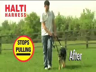 Halti Dog Harness A world leader in training harnesses and head collars