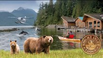 Wild Bear Adventure 2014! Grizzly Bears of Knight Inlet, B.C