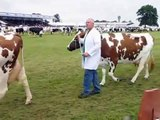 Dairy Cattle at the Royal Highland Show 2009 - Holstein Jersey Ayrshire and Dairy Shorthorn cows