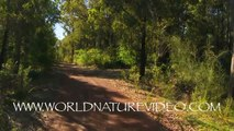 Virtual nature walk - Fitness Journeys: Forest & Bush Trails - Shady Forest