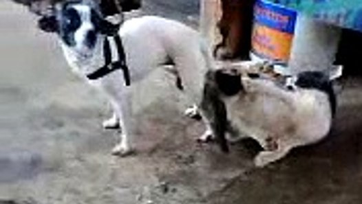 Dog stuck with cat while trying to have S E X - video dailymotion