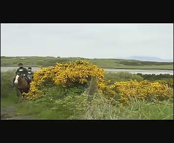 Horse Riding Ireland – Donegal, Sligo, Leitrim. Island View Riding Stables.
