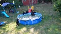 Un ours et cinq oursons se rafraichissent dans une piscine - Le Zapping insolite