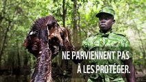 Sauvons les éléphants d'Afrique