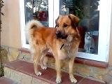 perro en adopcion en tres calas (ametlla de mar)