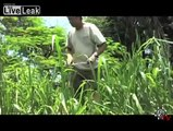 Florida Farmers Chickens    Eaten by Pythons  LiveLeakcom