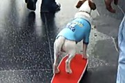 uggie the DOG  rides skateboard down Hollywood Boulevard
