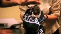 Intensieve opname bij honden, katten en overige dieren
