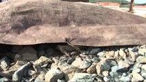 Tahiri: Task-Forcë kundër kontrabandës së mineralit të kromit