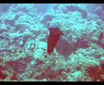 Plongée à Collioure