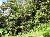 Tarzan Swing - Finale of the Adventura Canopy Tour - Monteverde, Costa Rica
