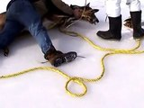 Rescuing Deer Trapped on Ice (near Bancroft, Ontario. Canada)