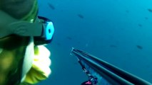 Spearfishing Yellowtail in So Cal (San Clemente Island)