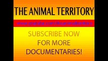 Documentary National Geographic: Animals´s Cemetery River- Lions & Crocodiles Attacks