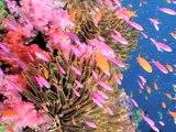 Arrecifes de Coral. Informe Planeta Vivo 2010