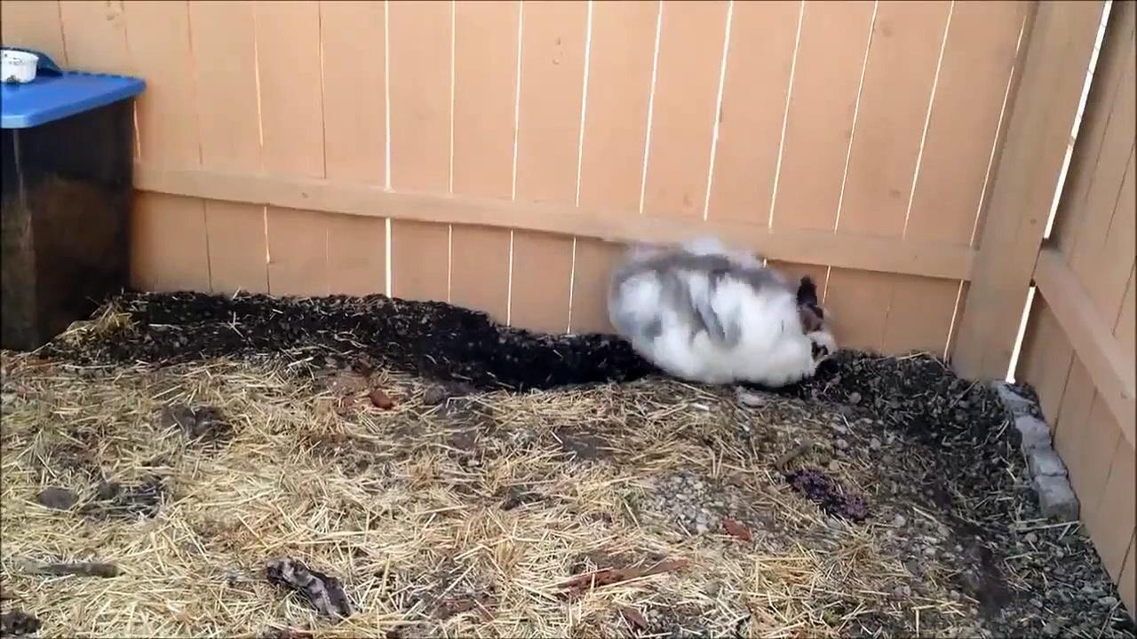 Funny Animals – Funny Animal Videos – Cute Animals – Funny