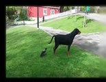 Top Funny animals Compilation animal Fails Kids, videos  ♥ Funny Animals compilation  and noises ♥
