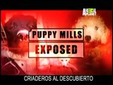 Rescate Canino -Desbaratando Criaderos Clandestinos
