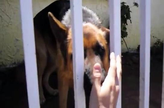 Petting a German Shepperd