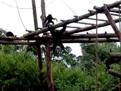 Multi Tasking Primates