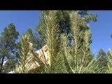 2009 Regional Tree Farmers of the Year, Western Region- Ken & Lois Carpenter, Pine Song Tree Farm