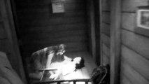 Evil Dead - Night Vision : Halloween Horror Nights 2013 at Universal Studios Hollywood