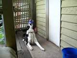 Ben my Border Collie dog doing his can trick Pt 1 / How smart are Border Collies?
